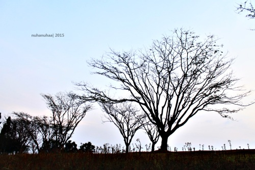 Pohonnya foto-able banget