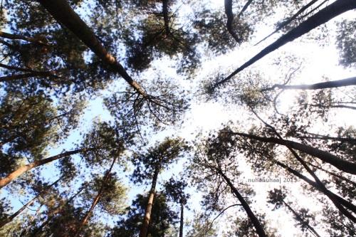 Tidur dibawah pohon-pohon kayak gini tuh = surga dunia